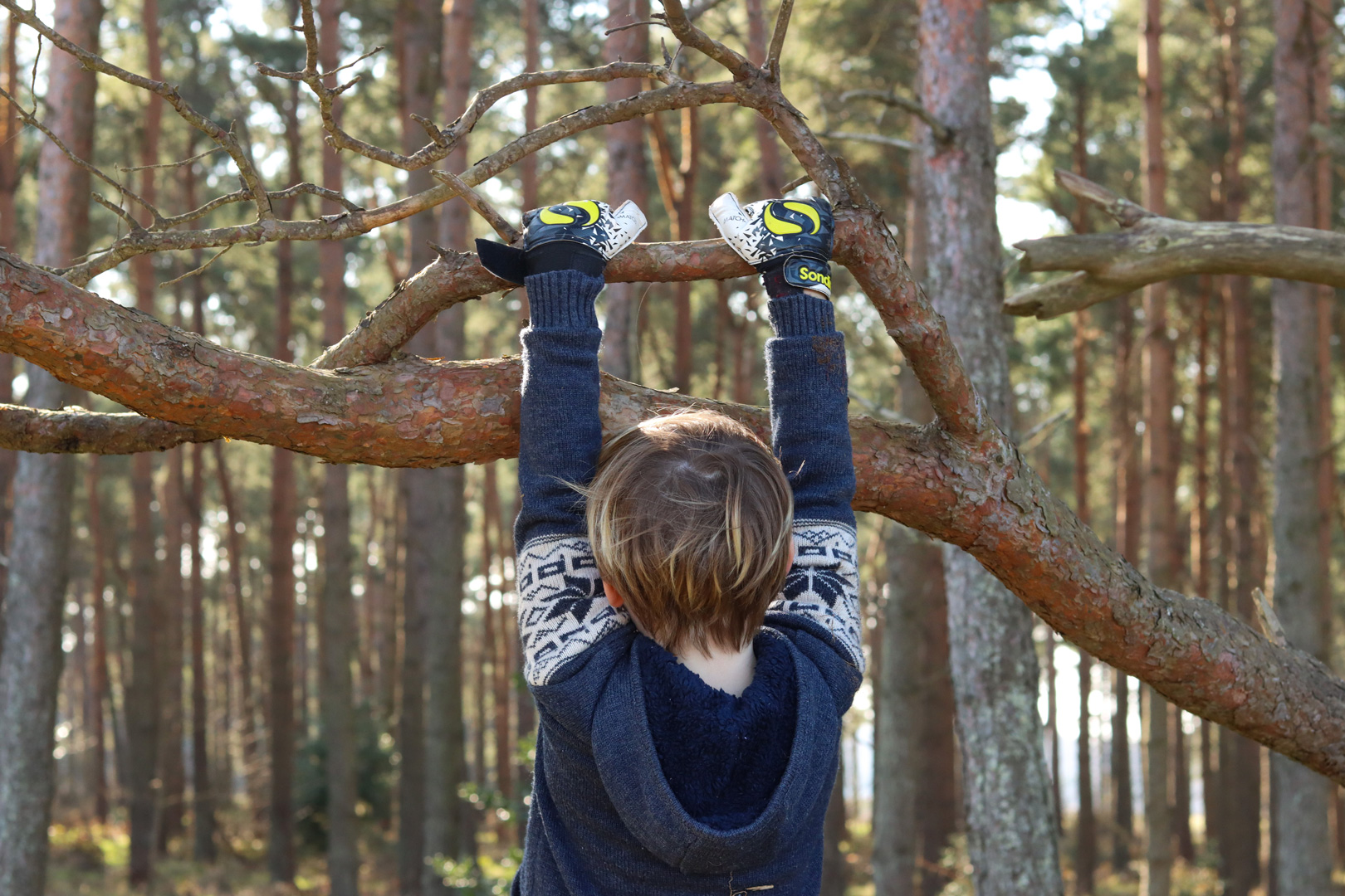 boy is hanging from the branch of a tree